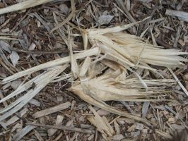 00153 - Corn Husks and Wood Chips by emstock