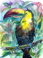 Watercolor TOUCAN painting (illustration) + video by jane-beata