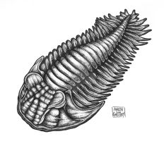 Trilobita by aaronjohngregory