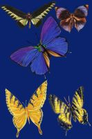 Vict pk 27-butterfly_quaddles by quaddles