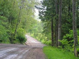 Road in the Forest by JocelyneR