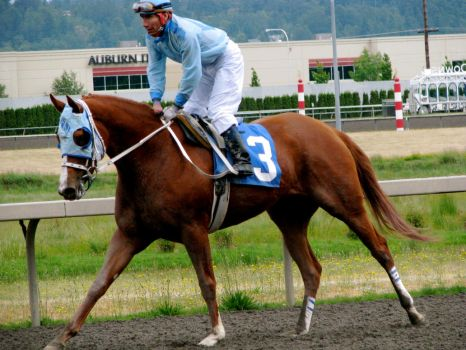 Stock - Racehorse 5 by EleganceApparent