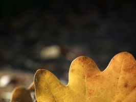 Leaves by AndreeaPB