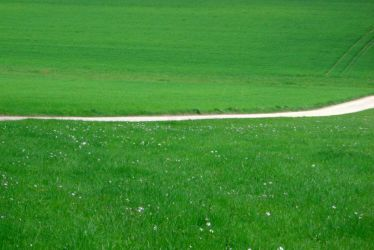 path and meadow by Mittelfranke