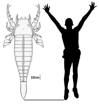 Pentecopterus And Human Size Comparison by PeteriDish
