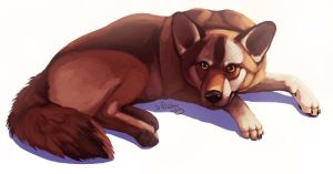 Maybe Alfie, maybe a Wolf :D by cottondragon
