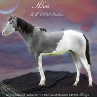 Alois by wsl30horselover10