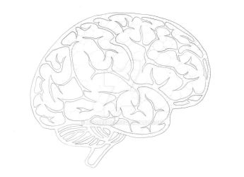 Right cerebral hemisphere by Anqueetas