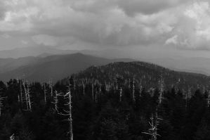 a forest of empty trees by Vacantia