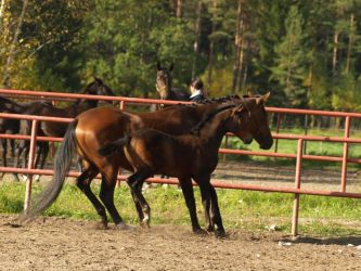 Trakehner mare and foal by wakedeadman