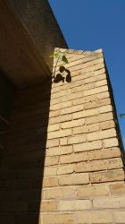 Tree Branch Rooted in a Brick Column by TheRealCommissioner