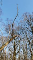 Walk in the Woods- Feb 2016- Trees 3 by andynortonuk