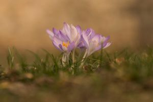 Spring by Cassini246