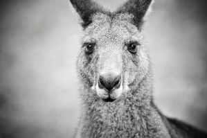 Proof that I'm an Australian Resident :-) by Wings-of-Light