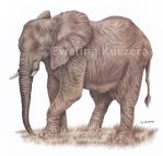 Elephant Drawing by Kot-Filemon