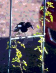 Magpie by JeanC38