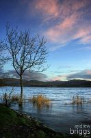 Windermere by cardinal