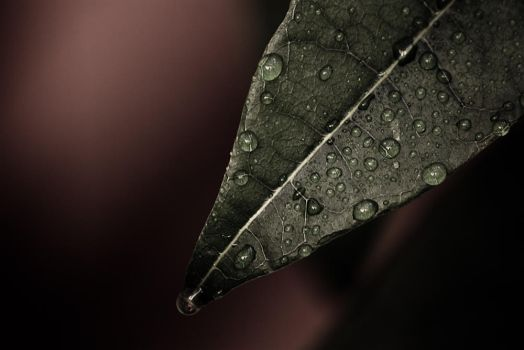 Drops by alexcontell