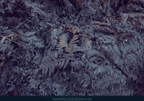 Icy Leaves Texture 04 by kuschelirmel-stock