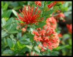 Red Flowers No.2 by slephoto