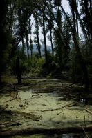 The swamp by onlymistress