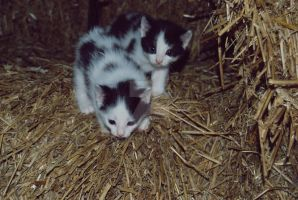 Dalmatian Kittens by theLindah