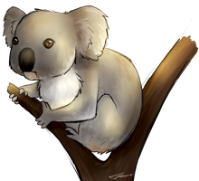 Koala by MaKeem