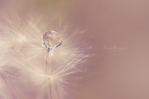 Wish by SheilaMBrinson