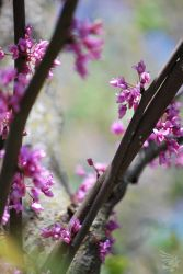 Spring at the Zoo by calger459