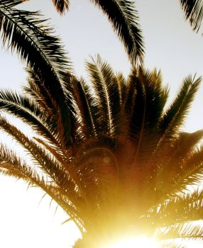 Palm by NicotineL