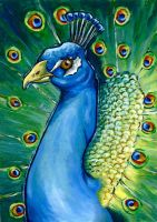 Peacock by Rynxo