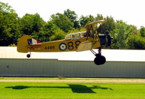 Tiger Moth Takes Off by laurelrusswurm