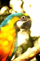 Parrot by Kayino1234