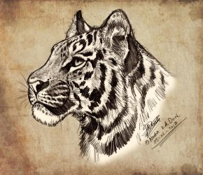 Tiger Pencil Sketch by NadiavanderDonk