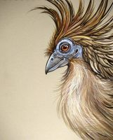 Hoatzin by HouseofChabrier