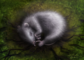 Sleeping sound and calm by lill