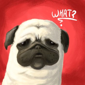 Pug of the day - What ? by SEEZ85