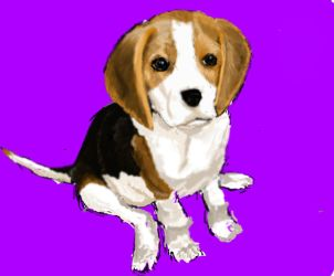 Beagle Puppy by AinSynagoga