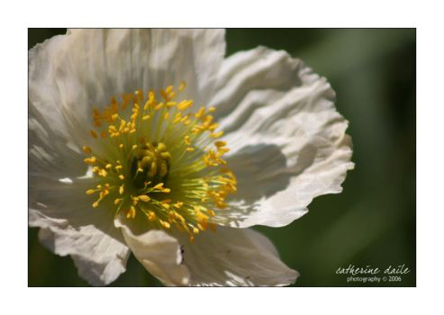 floriade 04 by cdaile