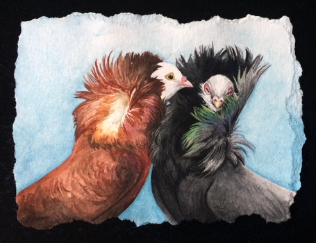 Jacobin Pigeon Couple by TheNeverEndingPit