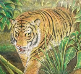 Tiger in the Jungle by TheStripelessTiger