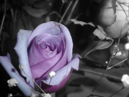Black and White Rose by KouryuuLurve