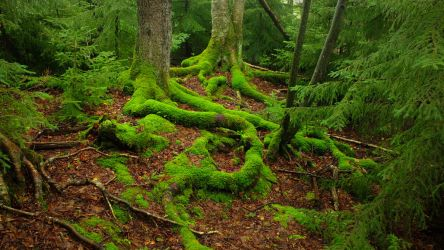 Moss Covered Tree Roots by JJonesJr69