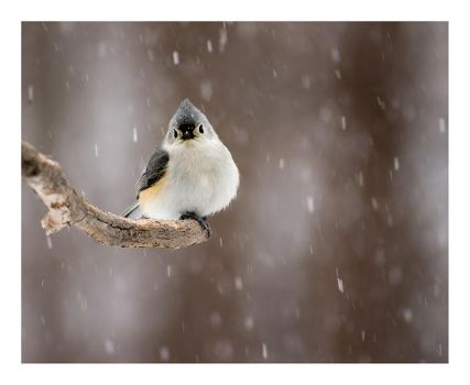 Coping by rscorp