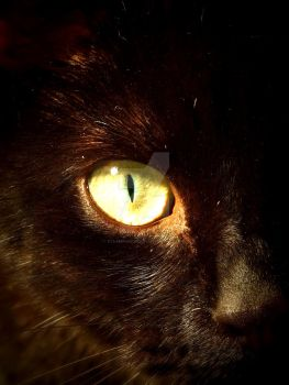 Eye of tiger/cat by SteampunkerGo