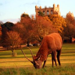 Wollaton Deer by newdawnimages
