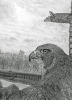 The Urban Peregrine by PhilipHarvey