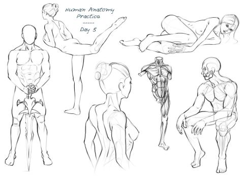 Anatomy Practice - Day 5 by Nixri