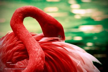FLAMINGO by TAvO85