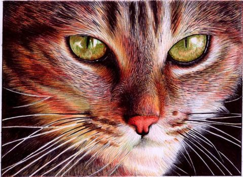 Cat face - Bic ballpoint pen by VianaArts